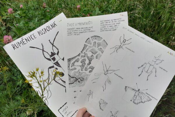 Louka a hmyz – pracovní listy