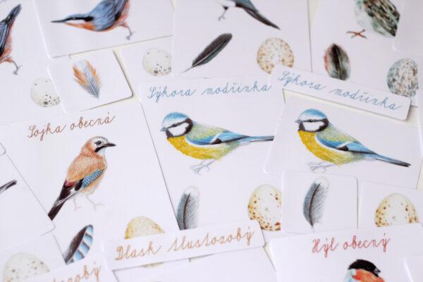 Ptáci – 5 složkové karty