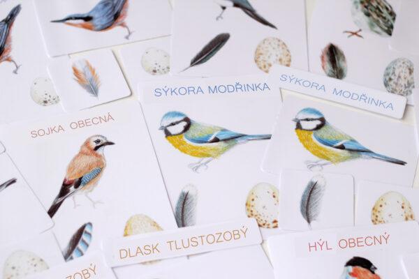*NOVÉ* Ptáci – 5 složkové karty