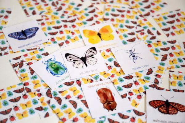 Pexeso – brouci a motýli